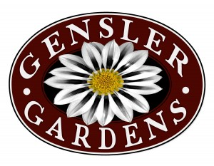 Gensler_Burgundy_with_White_Flower_Large